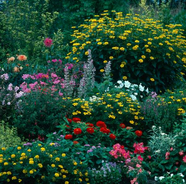 Flower border with yellow & pink flowers