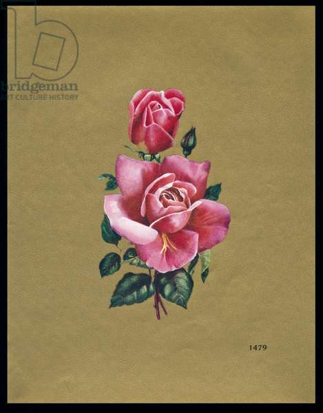 Chocolate box design, two pink roses