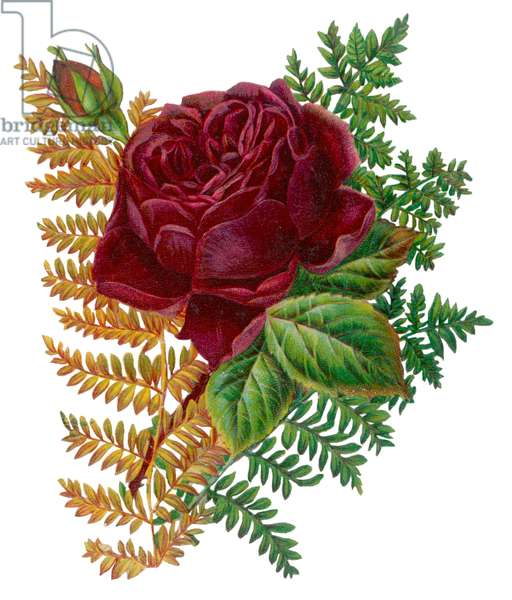 RED ROSE AND FERNS