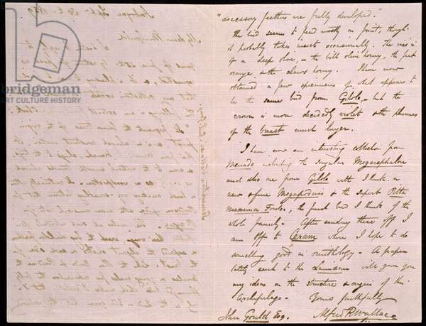Letter from Wallace to Gould