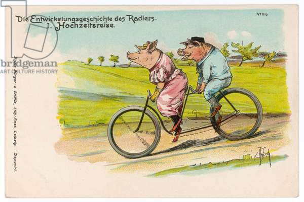 PIGS ON HONEYMOON