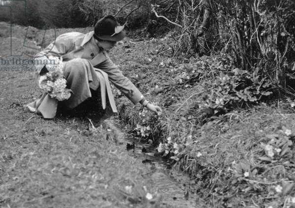 Woman picking primroses