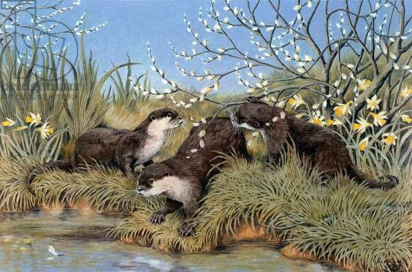 Three Otters on River Bank