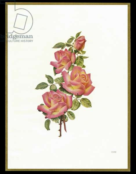 Chocolate box design, four pink roses