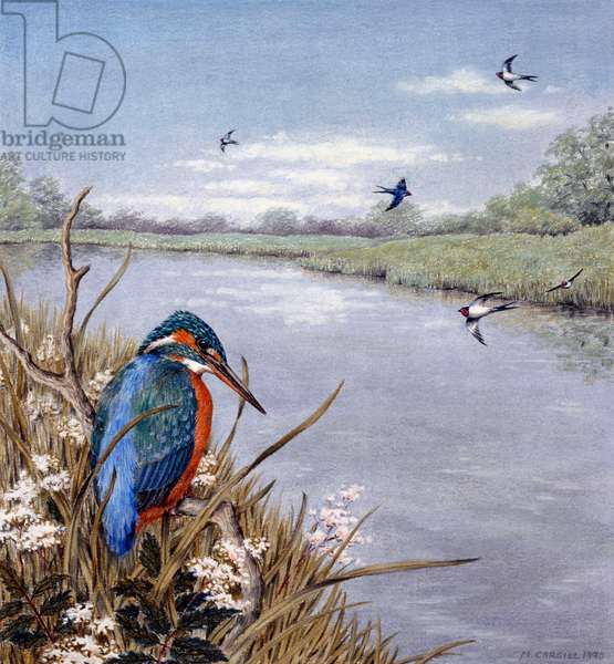 Kingfisher and Swallows