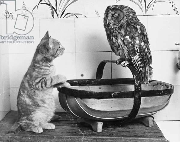 Kitten and Owl