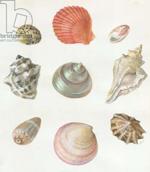 Shells - nine different sea shells