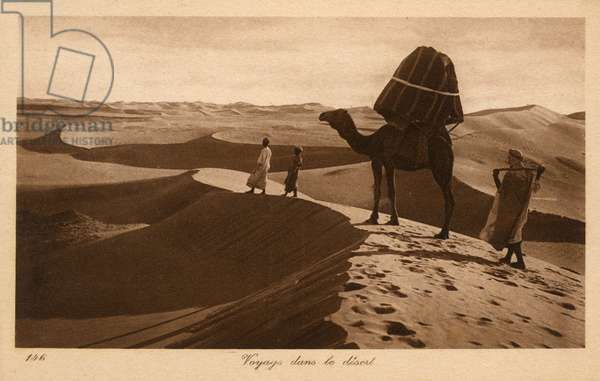 Travelling across the Sahara, Egypt - Camel