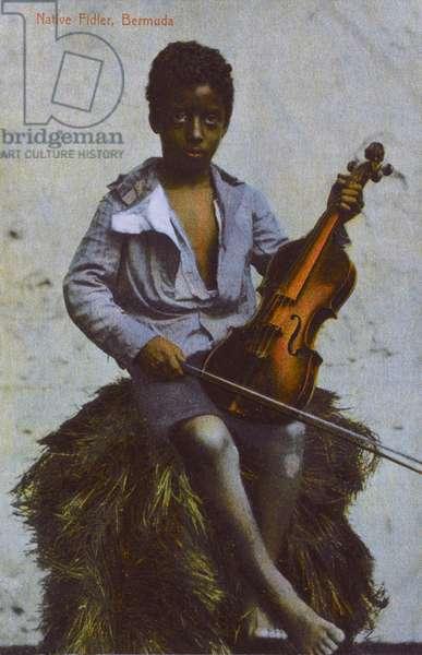 Young Fiddler, Bermuda