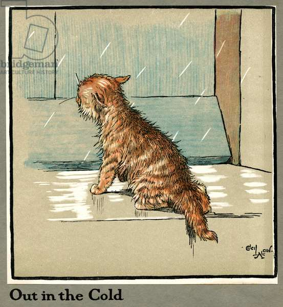 Rufus the cat out in the cold and rain
