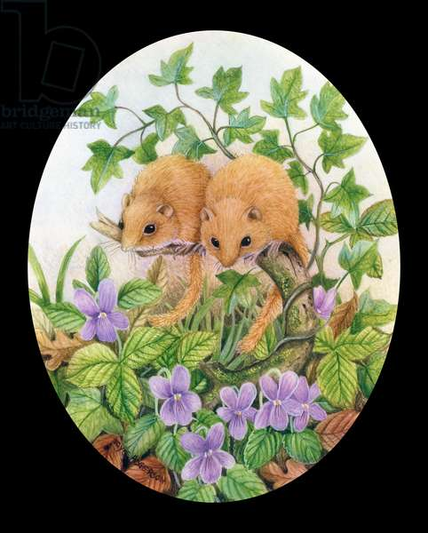 Two Dormice with Violets