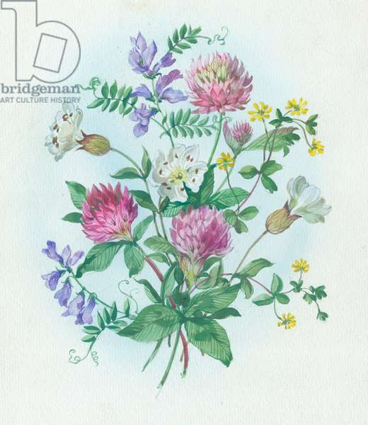 Clover, tufted vetch and sea campion