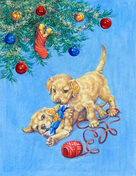 Two puppies playing with Christmas cracker