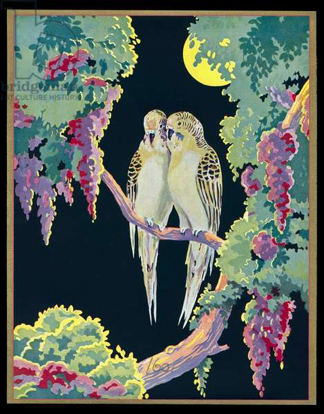 Chocolate box design, two budgerigars