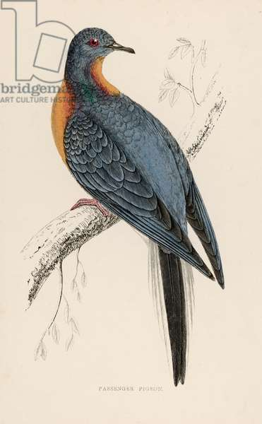 PASSENGER PIGEON-EXTINCT