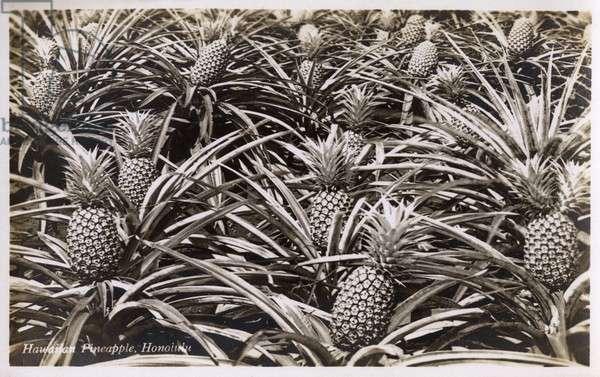 Hawaiian Pineapples - Honolulu, Hawaii, USA