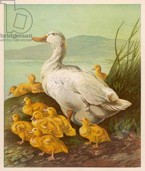 DUCK WITH DUCKLINGS 1877