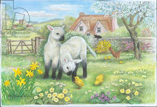 Two Spring lambs in a field