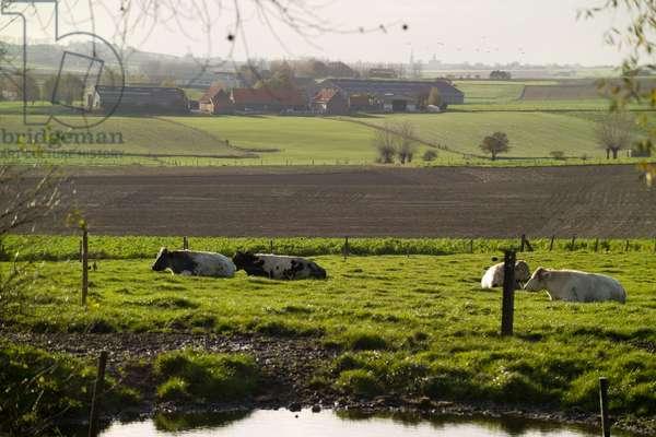 Fields of Battle - Messines
