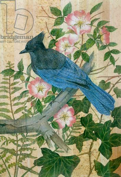 Stellers Jay with Pink Wild Roses