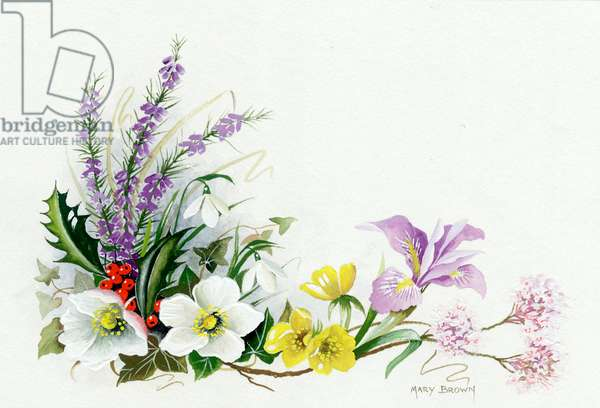Early spring flowers and berries - heather, holly, Christmas