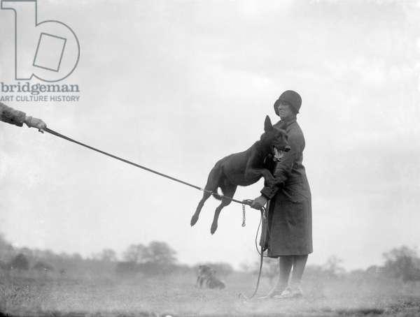 DOG JUMPING 1930S