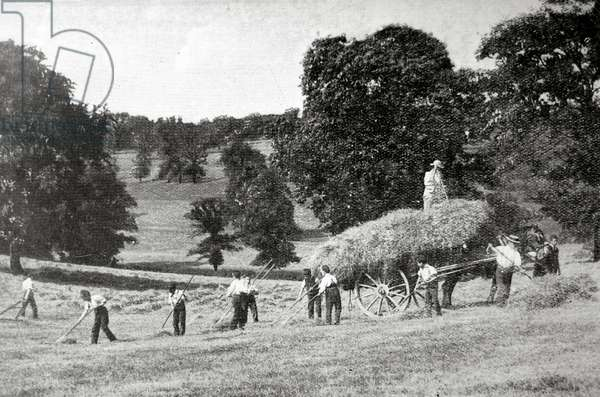 Hay Harvest, Barnet Industrial School.