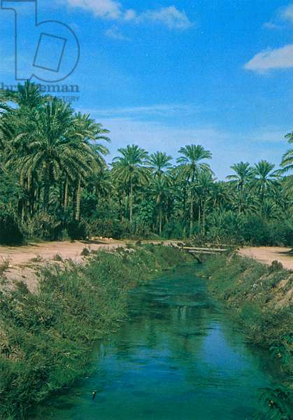 Saudi Arabia - Irrigation Canal in Al-Qatif