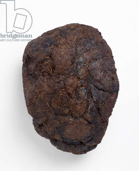 Ground sloth droppings or coprolite
