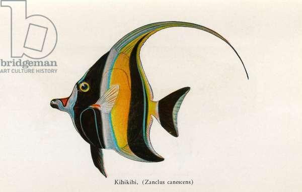 Kihikihi, Fishes of Hawaii
