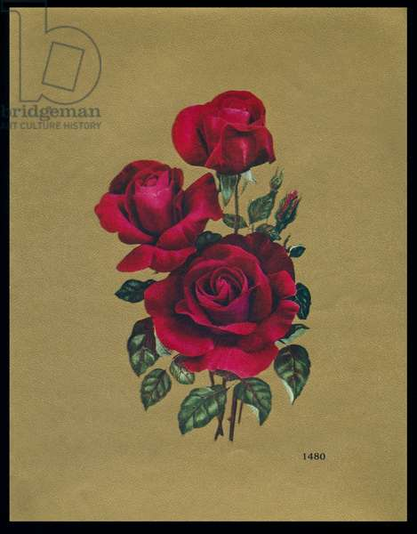 Chocolate box design, three red roses