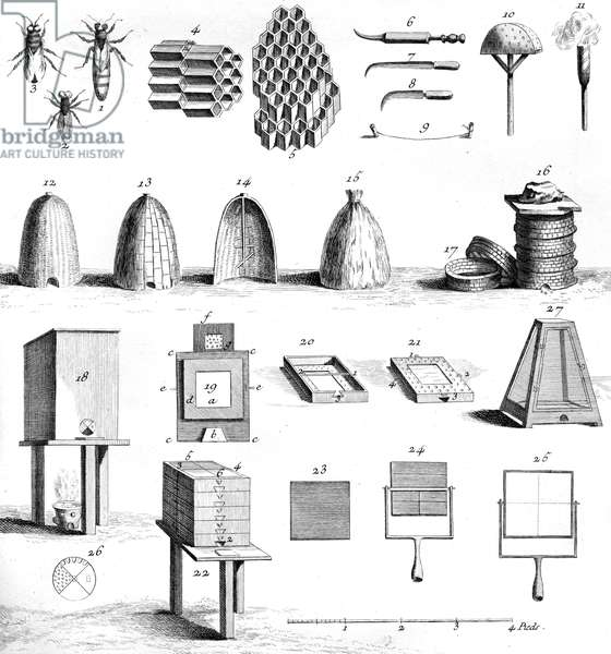 Encyclopedie : apiculture