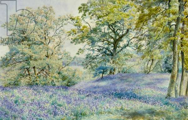 A Host of Bluebells