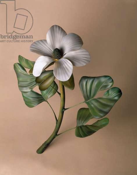 Early flowering plant model