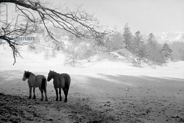 A snow scene in the Lake District, January 1946 (b/w photo)