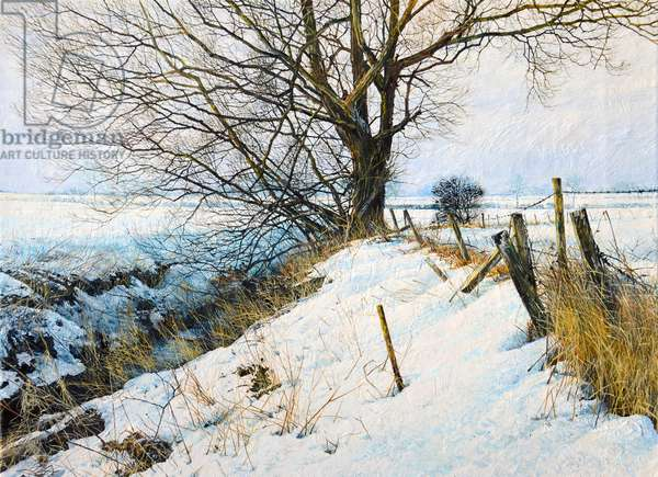 Snow willow and ditch (oil)