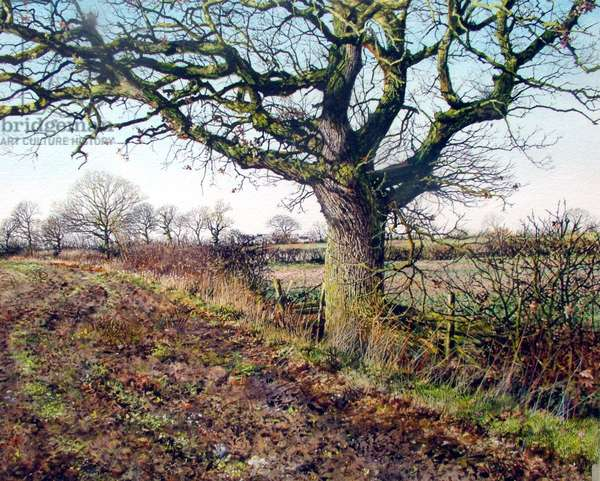 Oak (watercolour)