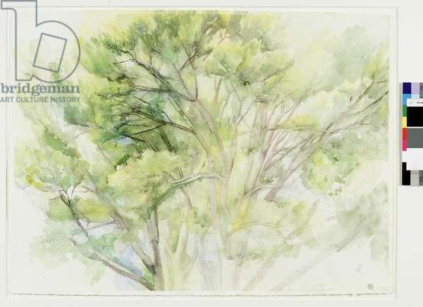 The Pin Oak 7/01, 2001 (w/c & pencil on paper)