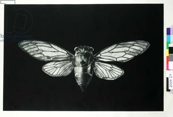 Cicada, 2004 (etching & aquatint on cream hahnemuhle copperplate paper)