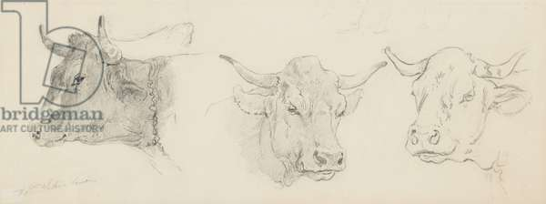 Study of cattle for 'Sheep Shearing', 1872-77 (graphite on buff wove paper)