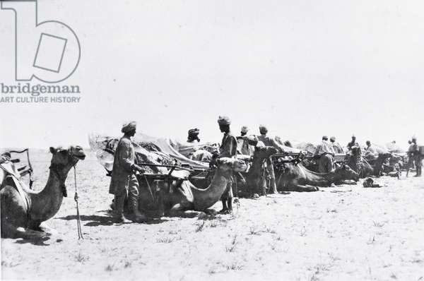 Soldiers with camels in Mesopotamia during World War One, from an album compiled by Lt. Kindom (b/w photo)