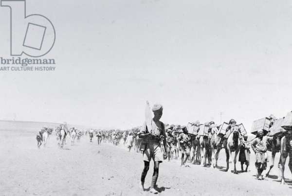A camel supply train in Mesopotamia during World War One, from an album compiled by Lt. Kindom (b/w photo)