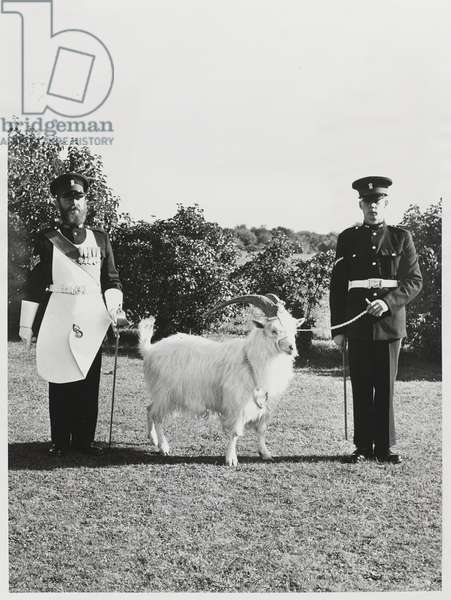 A regimental goat of the Royal Welch Fusiliers with his goat major and a farrier, 1950 circa (b/w photo)
