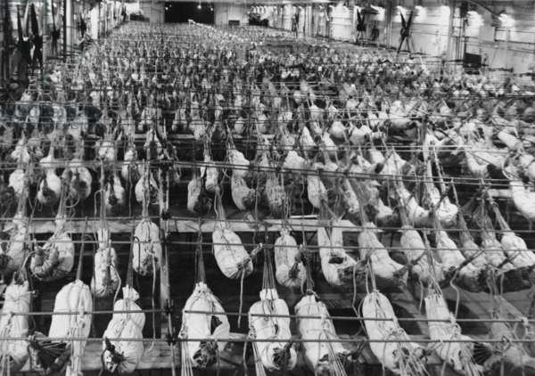 The hangar deck of HMS Illustrious showing the hammocks of the three battalions en route to Egypt, 1951 (b/w photo)