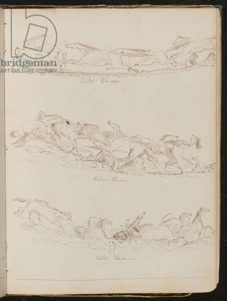 Three studies of horses galloping freely (pen and ink)