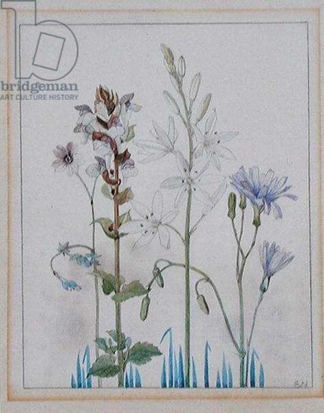Wild Flowers II (w/c on paper)