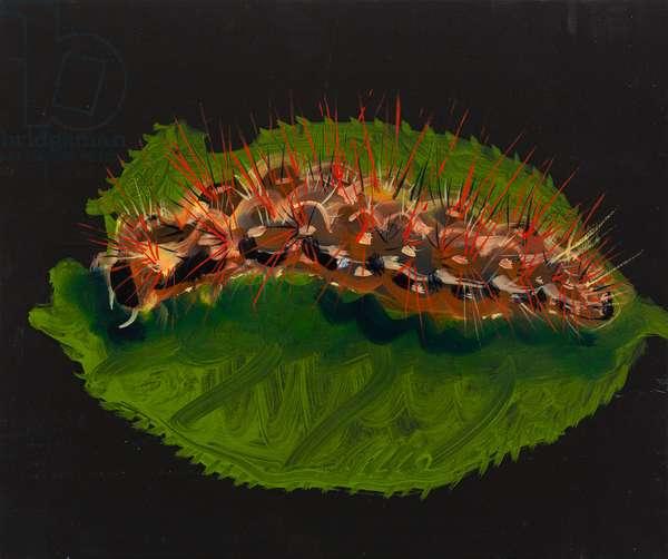 Hairy caterpillar, 2015, (oil on wood)