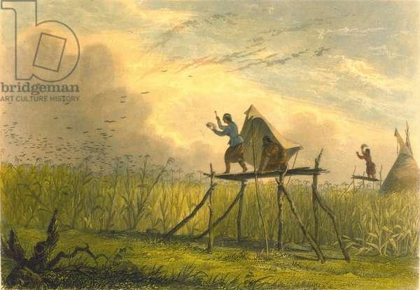 Guarding the Corn Fields, 1853 (colour litho)