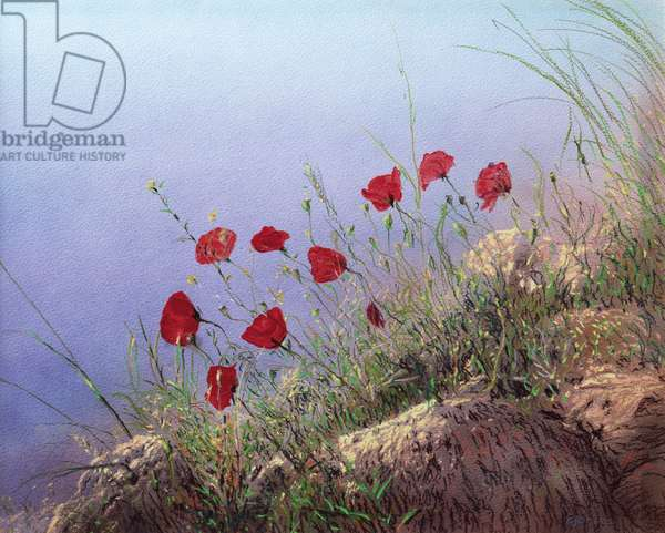 Poppies (w/c & pastel on paper)