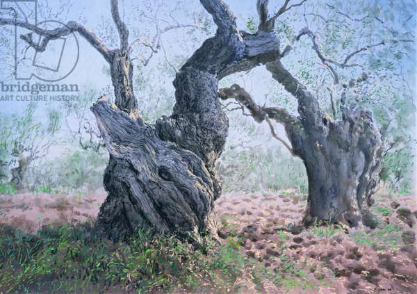 Olive Trees, Sparta, 2000 (w/c and pastel on handmade paper)